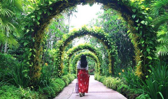 singapore-botanic-gardens-orchid-garden